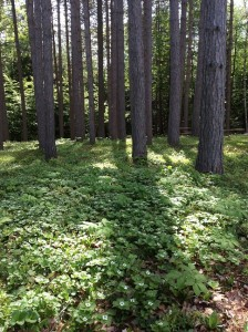 TreesBassPark-small